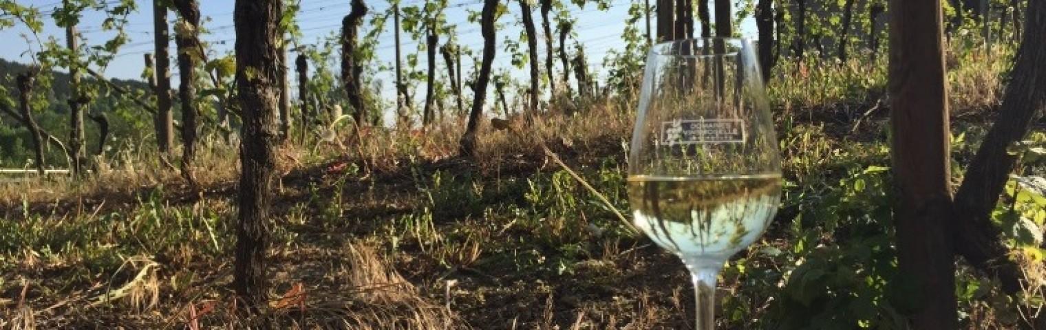 Ebba Rönneskog visits wine region Grevenmacher in Luxembourg