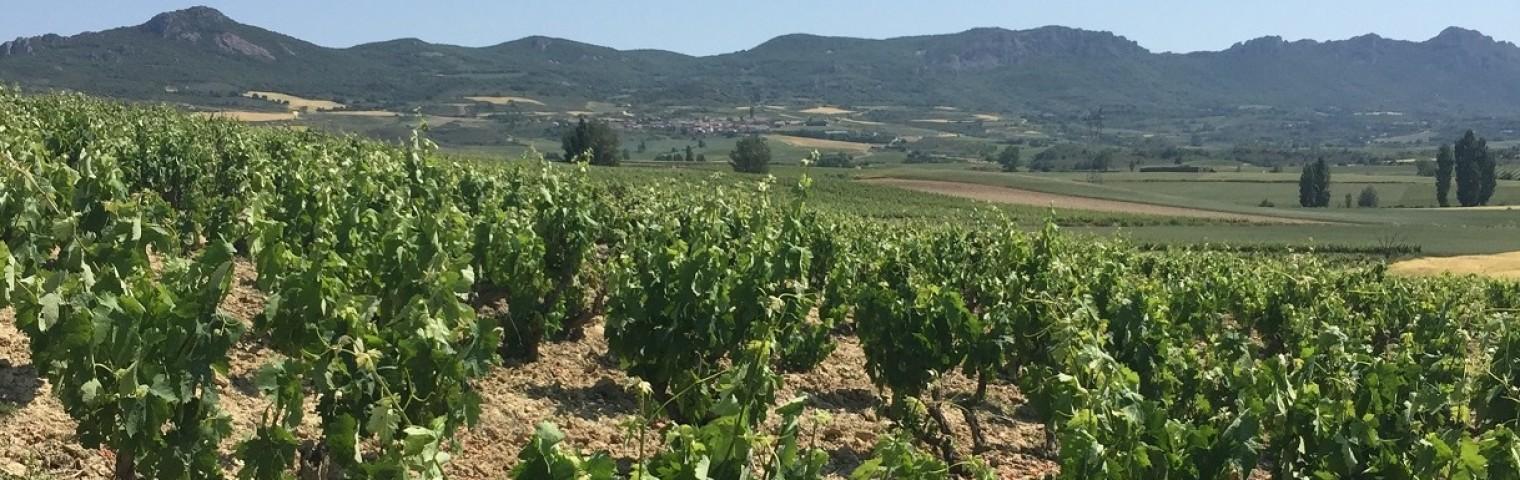 Emma Bill visits Inverse Trade Mission to La Rioja
